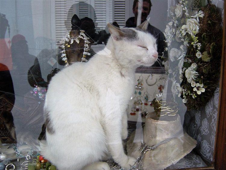 Jeweller Cat