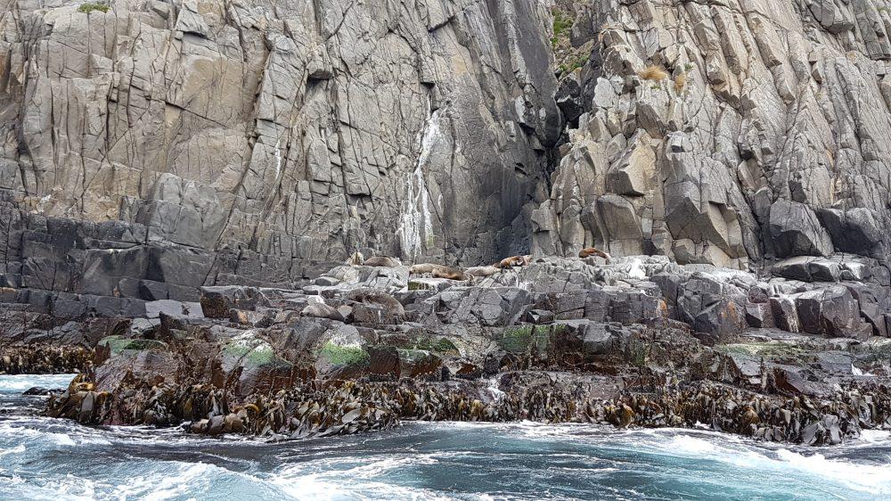 Tasmania Seal colony Bruny Island