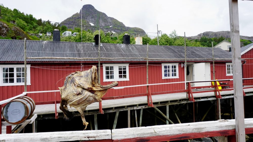 Lofoten Islands Norway - dried fish 5