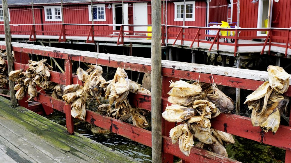 The Lofoten Islands Norway - cod fish drying 3
