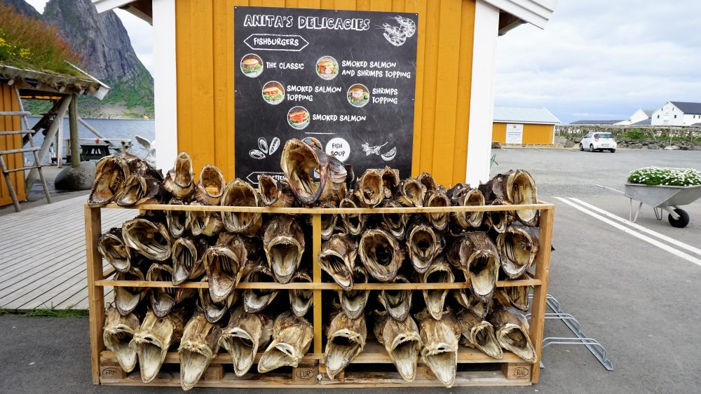 The Lofoten Islands Norway - cod fish drying 2
