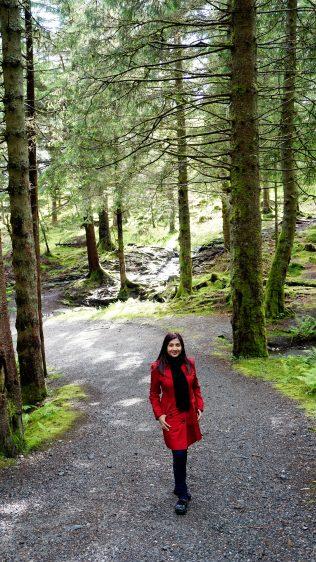 Walking around Mt Floyen